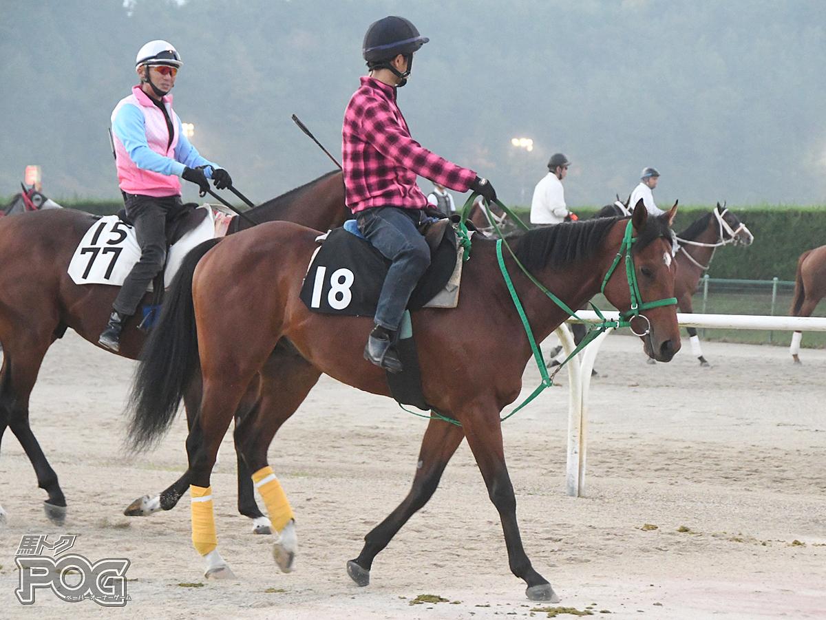 アウトバーンの馬体写真