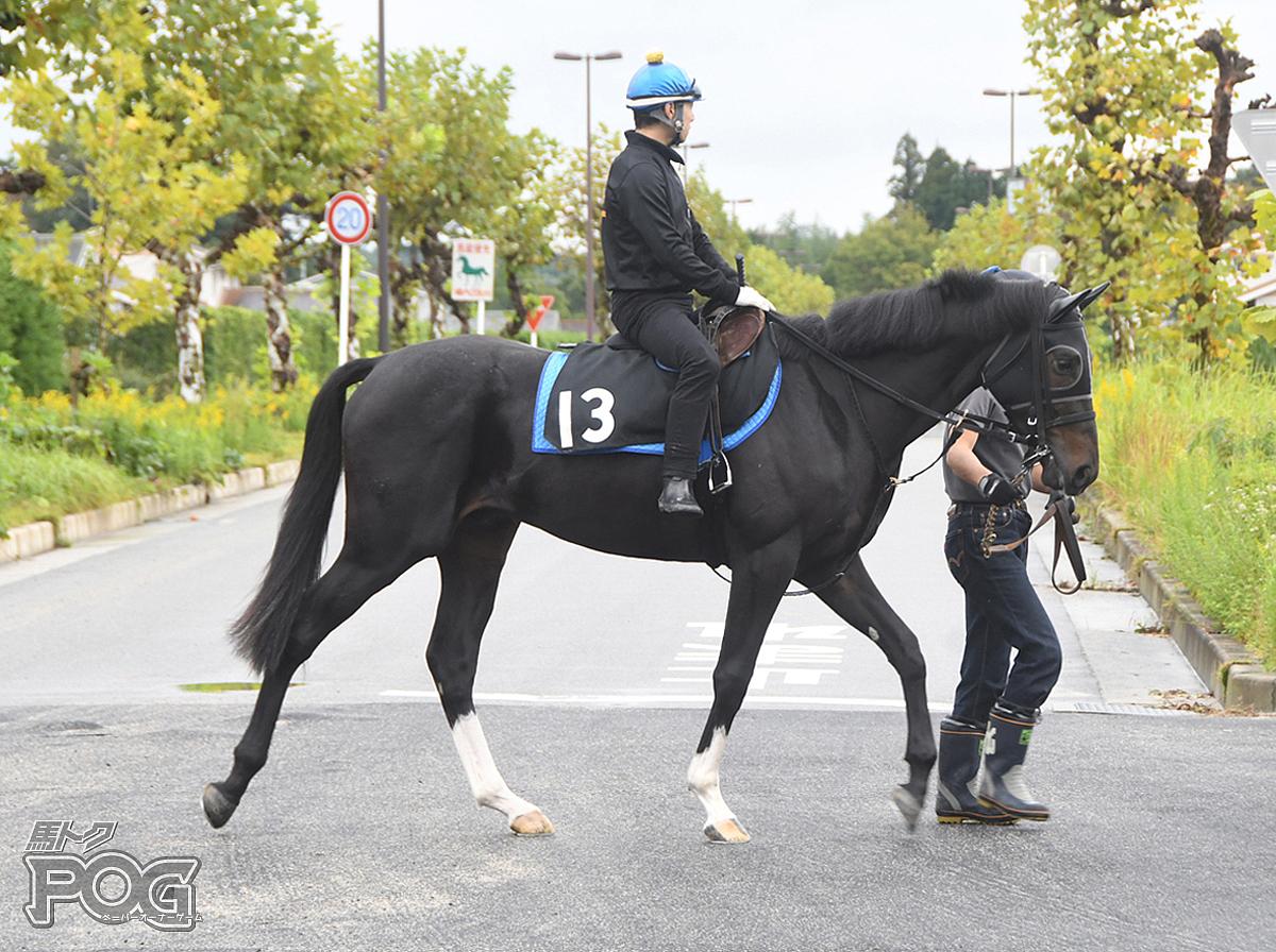 アイファーフライトの馬体写真