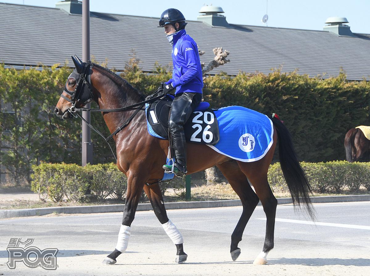スマートレイブンの馬体写真