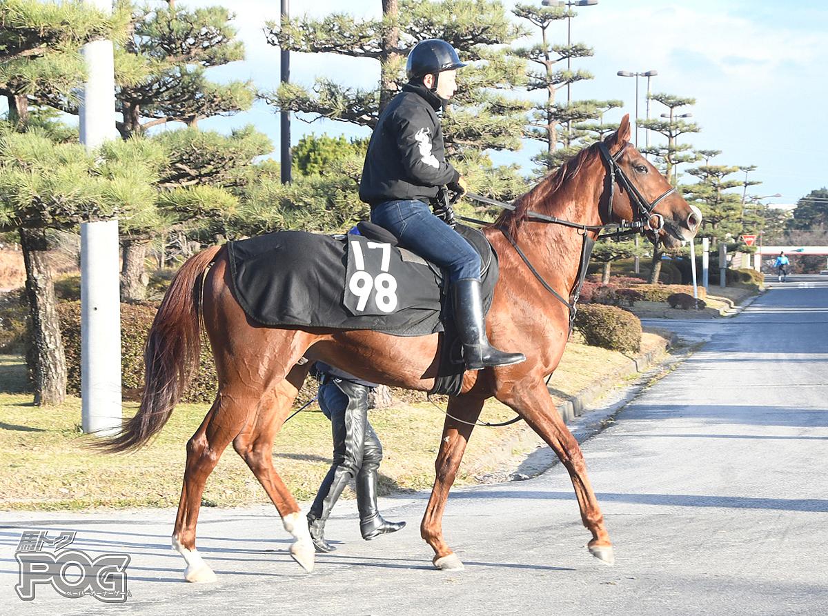 ミッキーサウンドの馬体写真