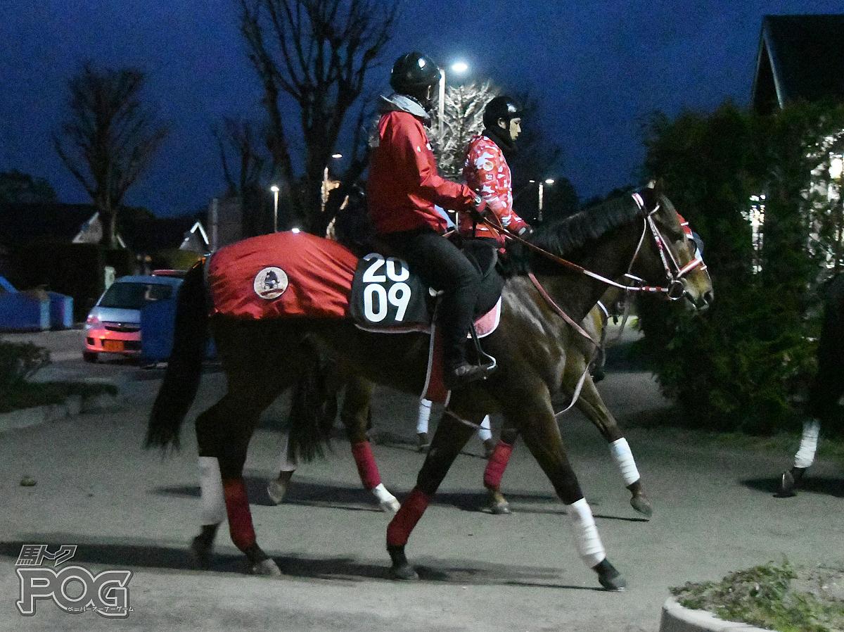 パーフェクトウェイの馬体写真