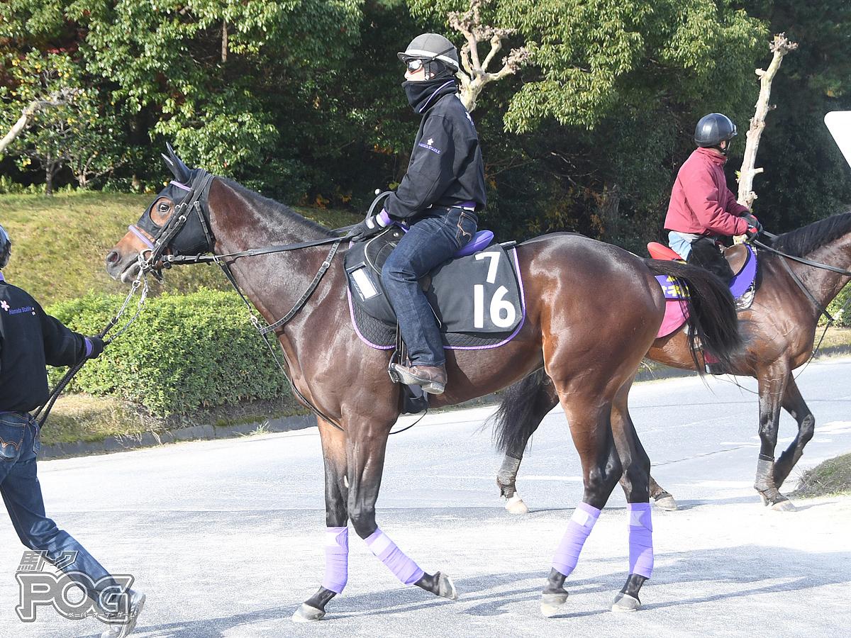 トラインの馬体写真