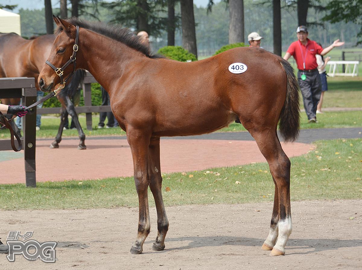 ララシャンパーニュの馬体写真
