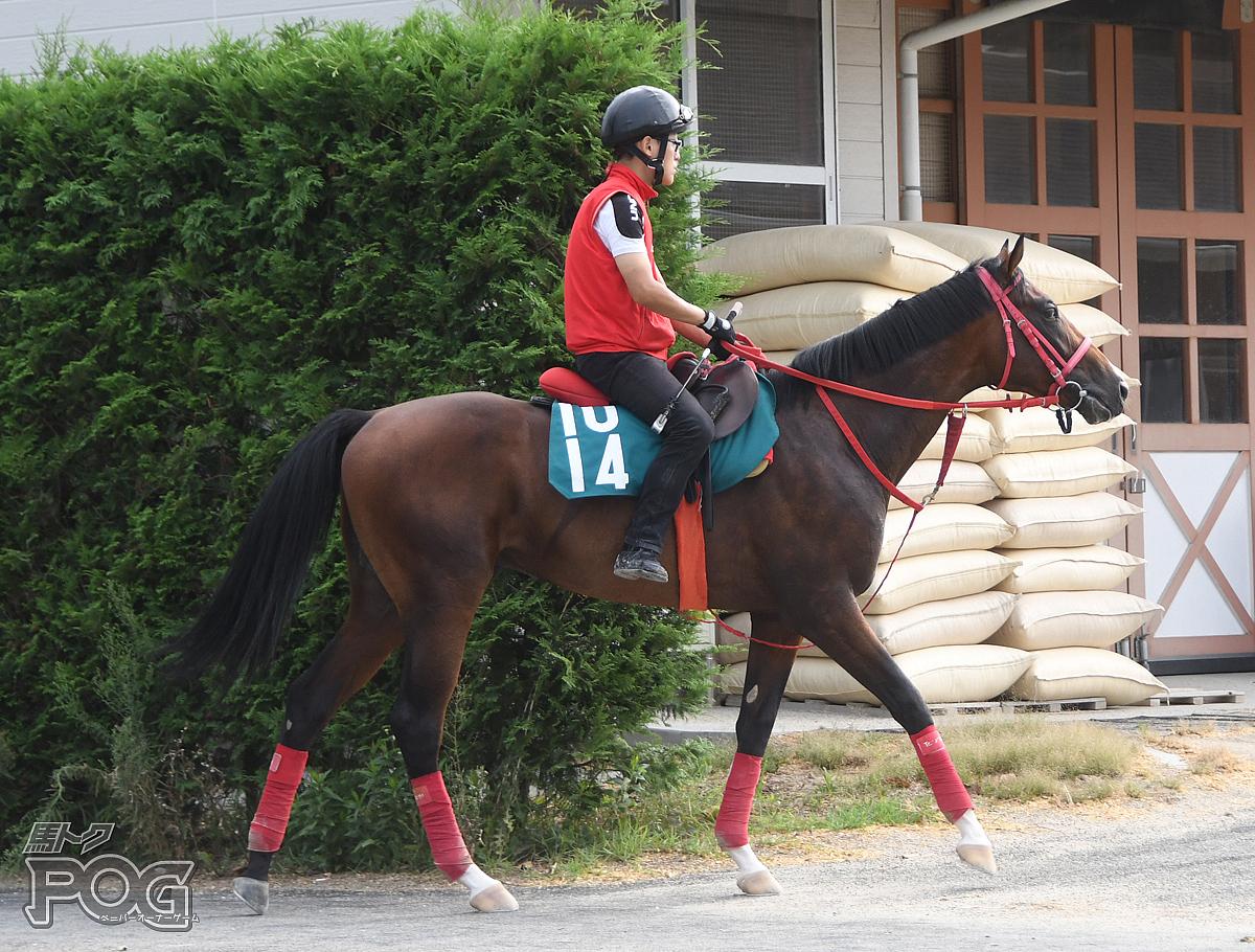 ソルフェージュの馬体写真