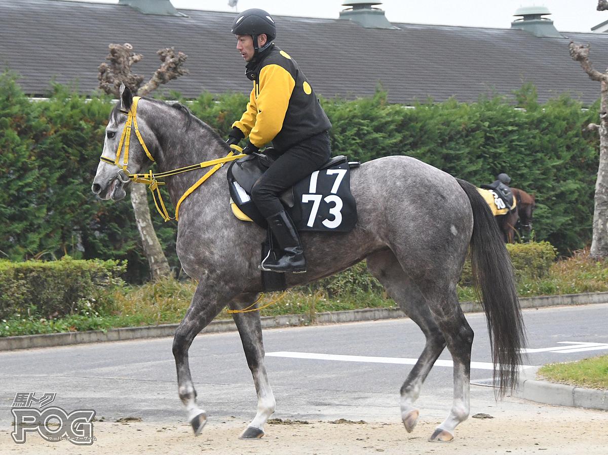 レクイエムの馬体写真