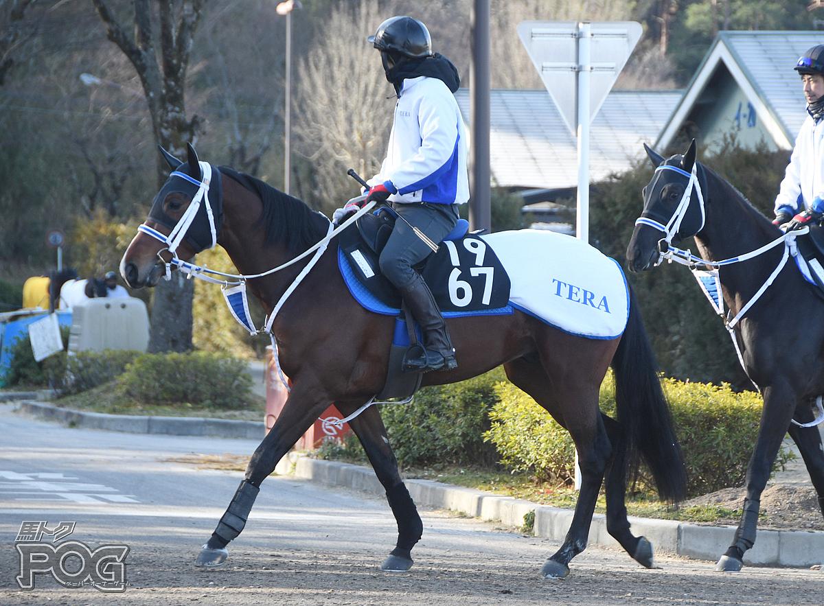 ベルウッドショウゴの馬体写真