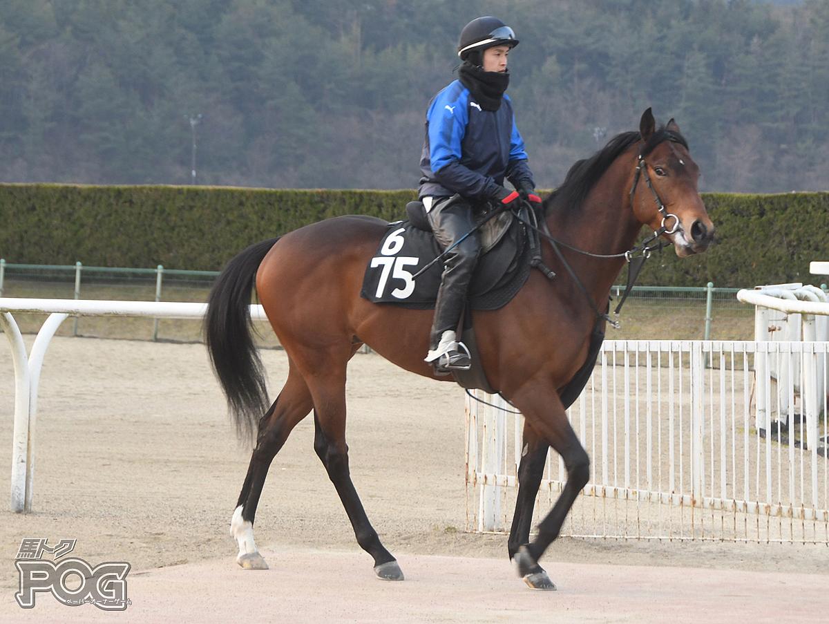 テイケイラグーンの馬体写真