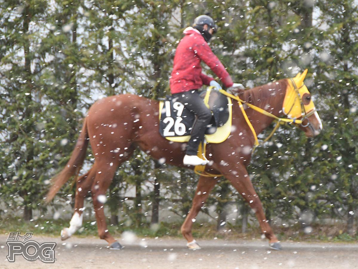 グランドレビューの馬体写真