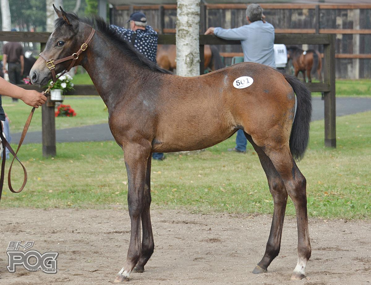 カリオカフレイバーの馬体写真