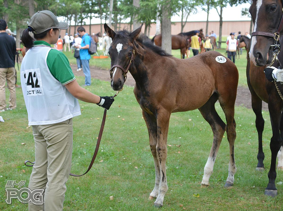 ソリフロールの馬体写真