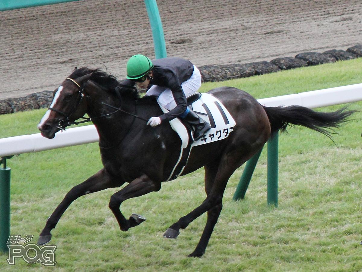 キャクタスの馬体写真