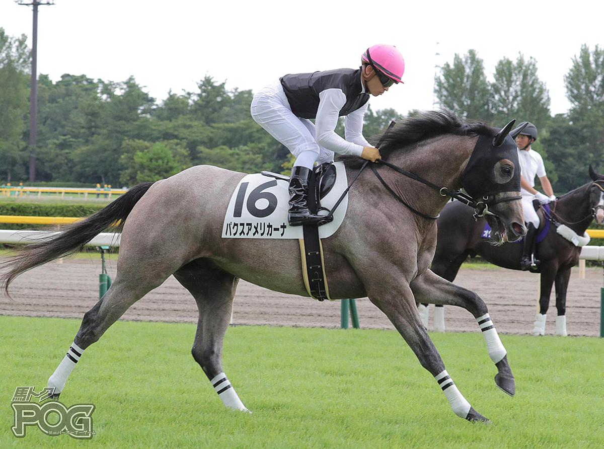 パクスアメリカーナの馬体写真