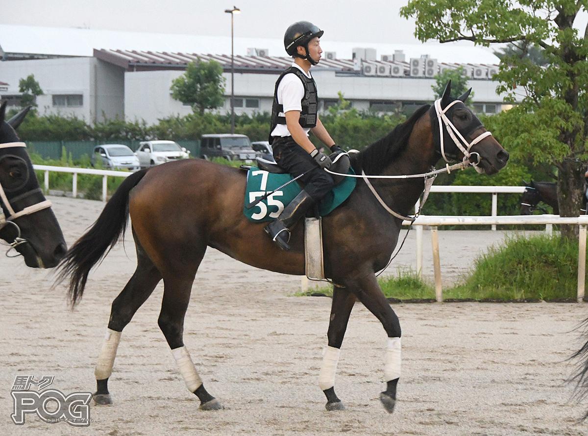オルニスの馬体写真