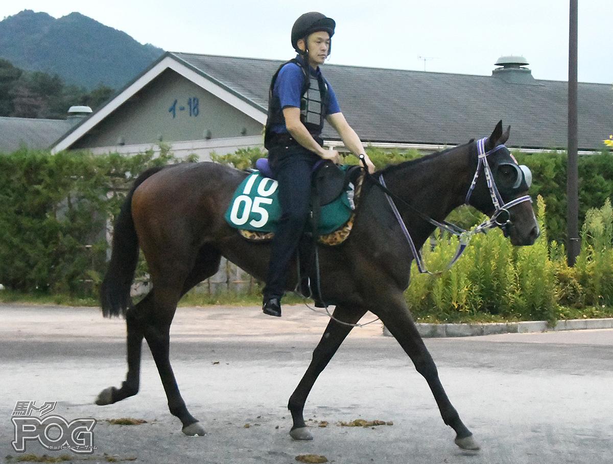タイセイプリマの馬体写真