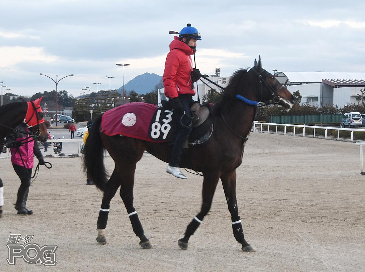 アイネバーフェイルの馬体写真