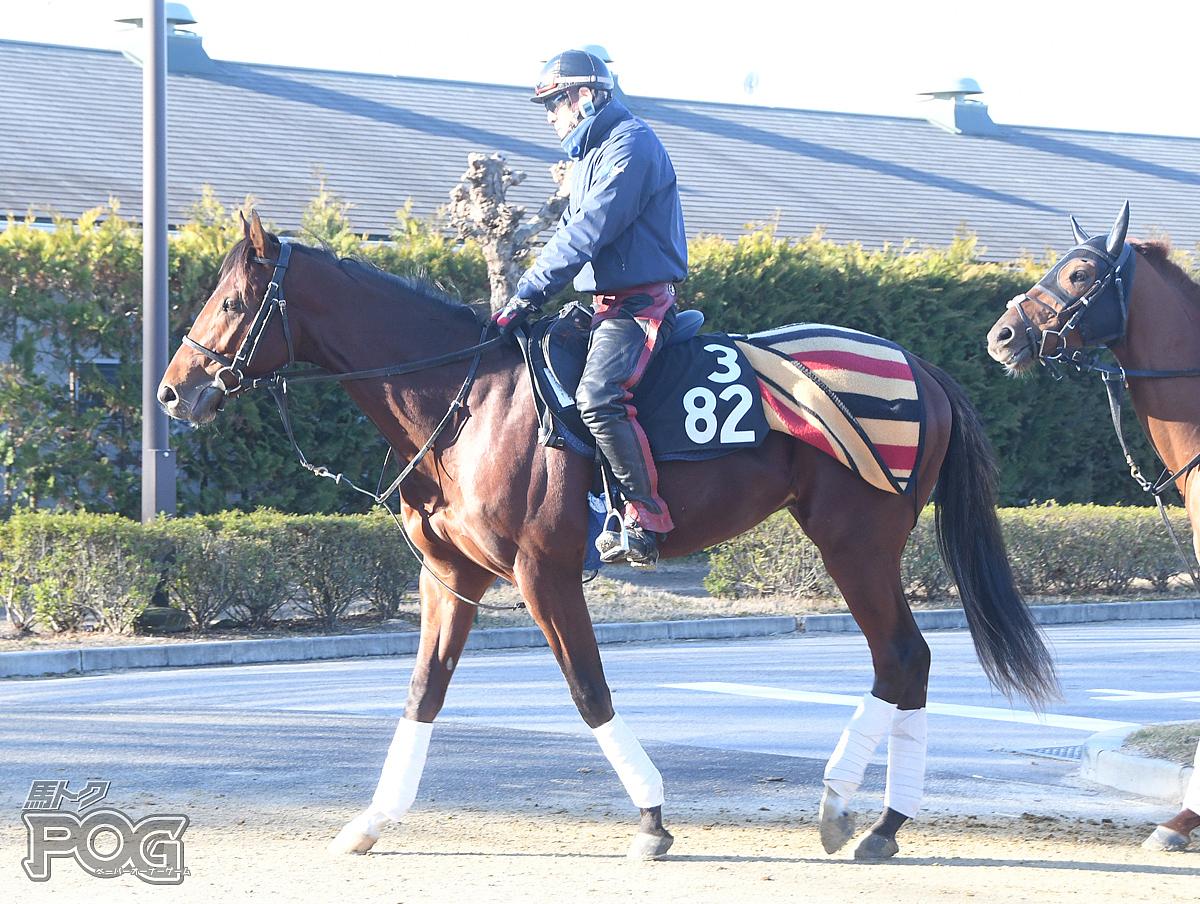 サトノグリッターの馬体写真