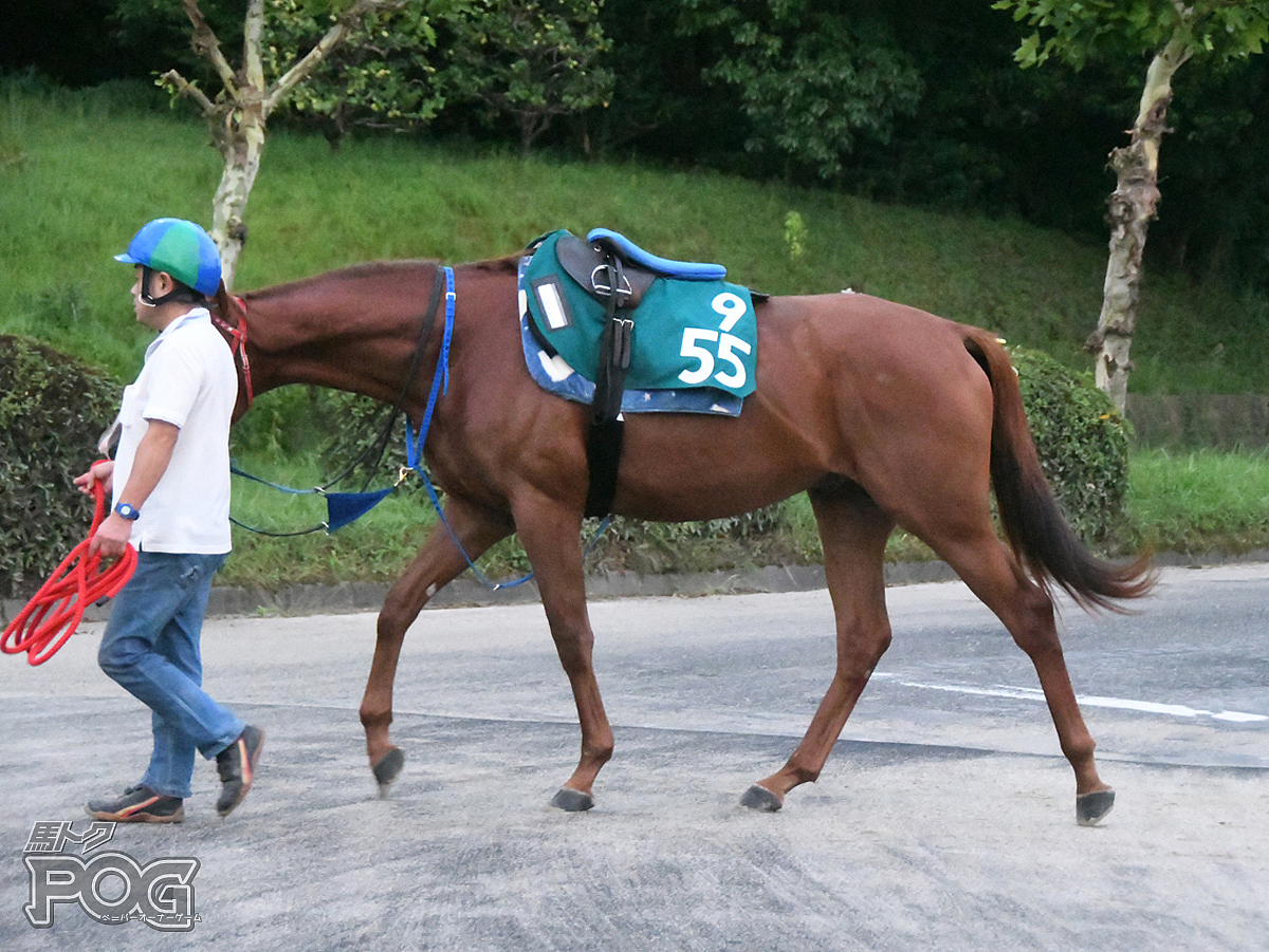 メテオラシチーの馬体写真