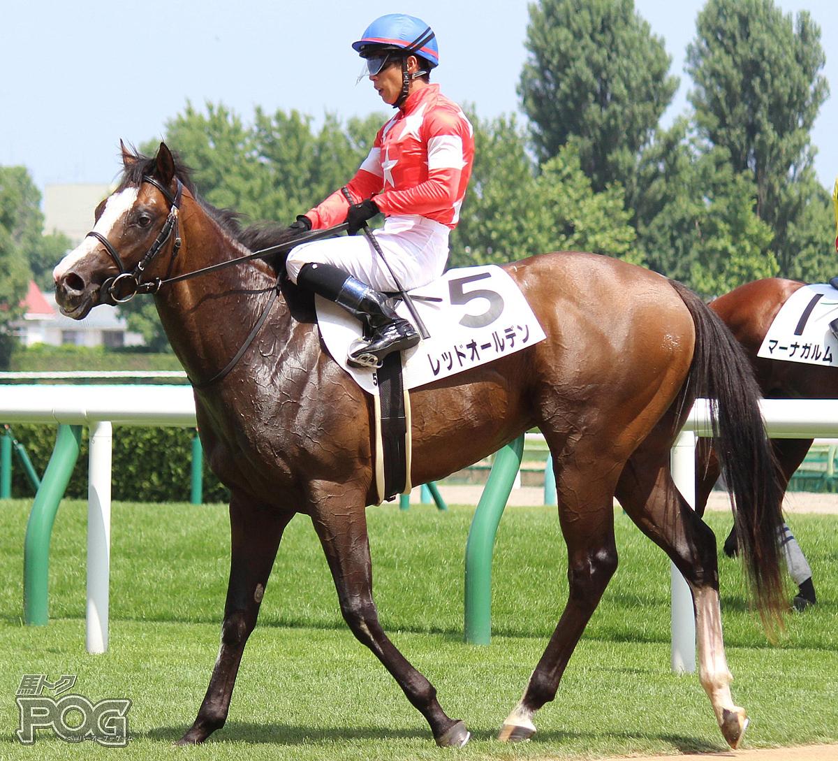 レッドオールデンの馬体写真