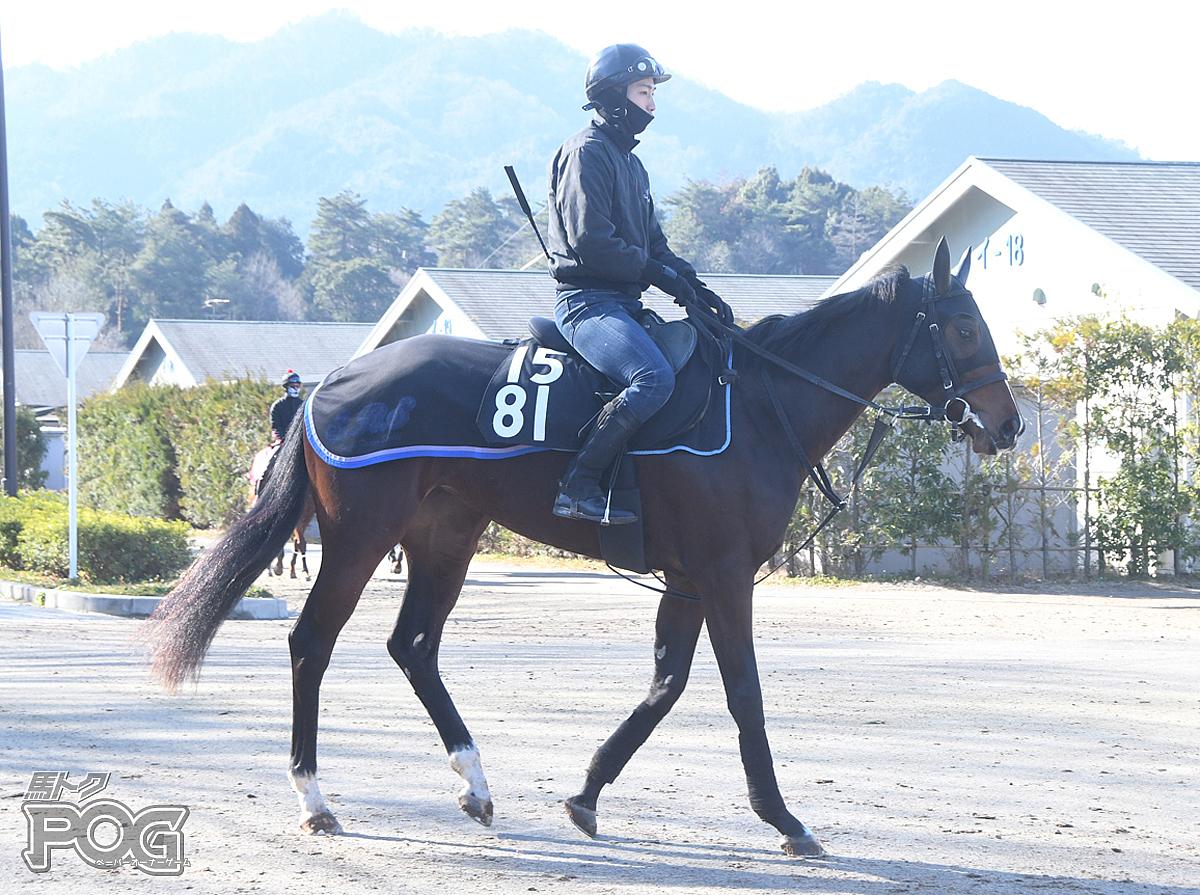 アンシェンヌヴィルの馬体写真