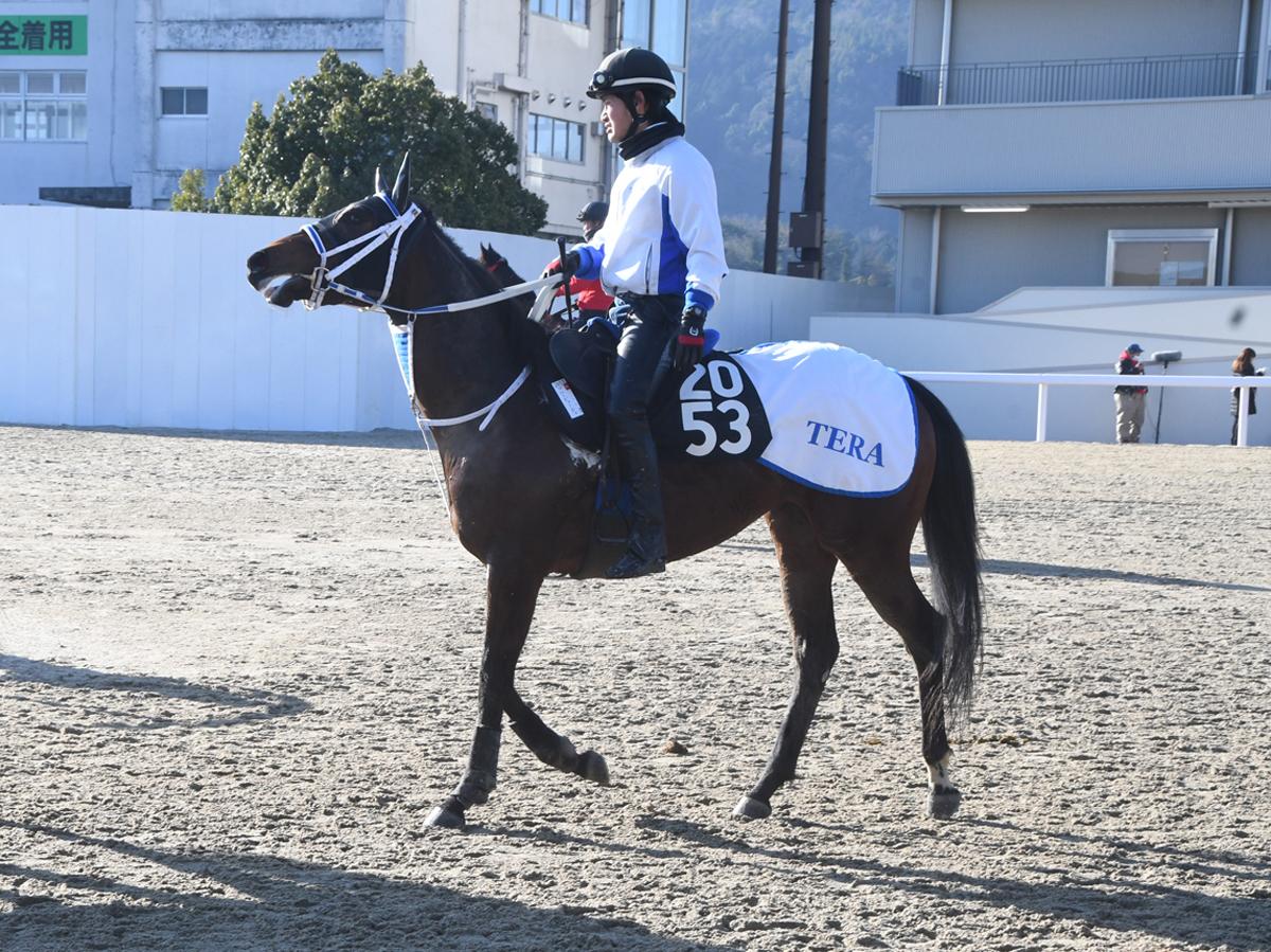 ブルービューティの馬体写真