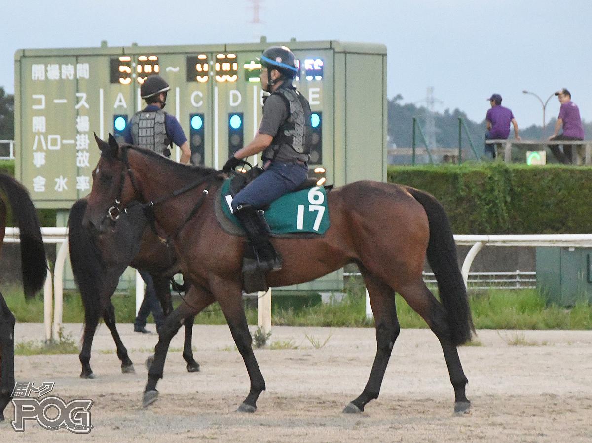 ニホンピロフェスタの馬体写真