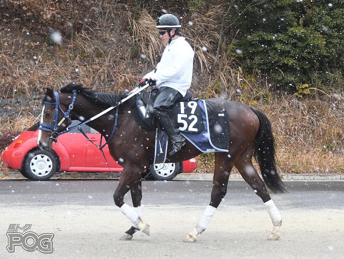 スキュータムの馬体写真