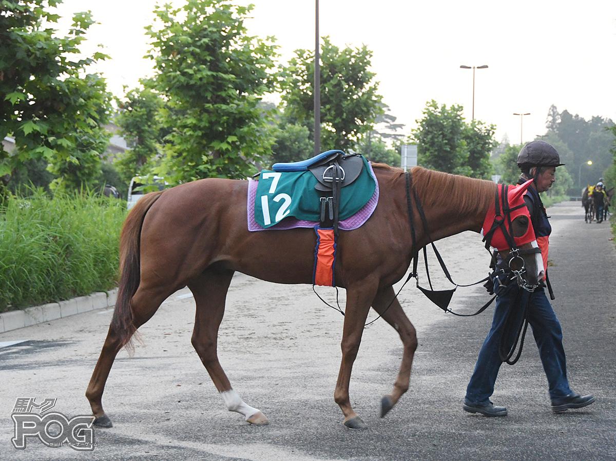アイファーエーワンの馬体写真