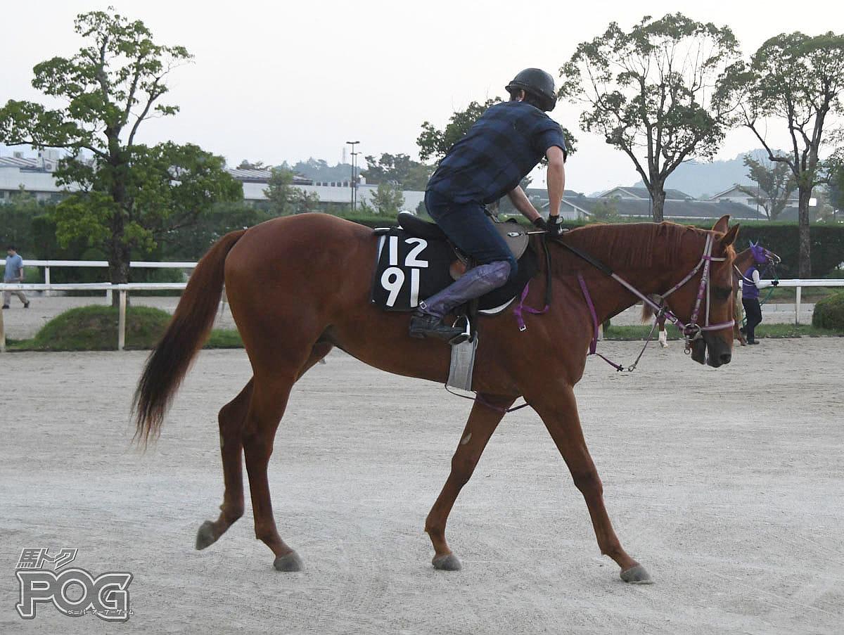 モズオラクルの馬体写真