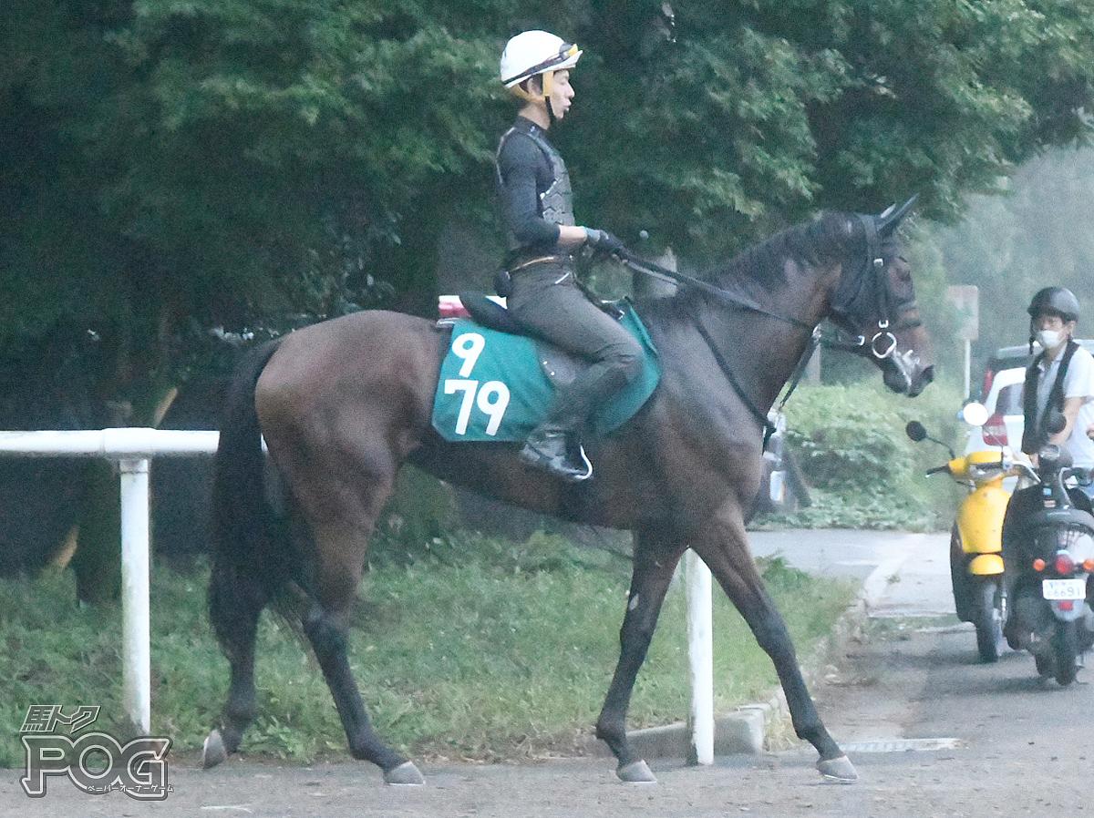 ウスベニノキミの馬体写真