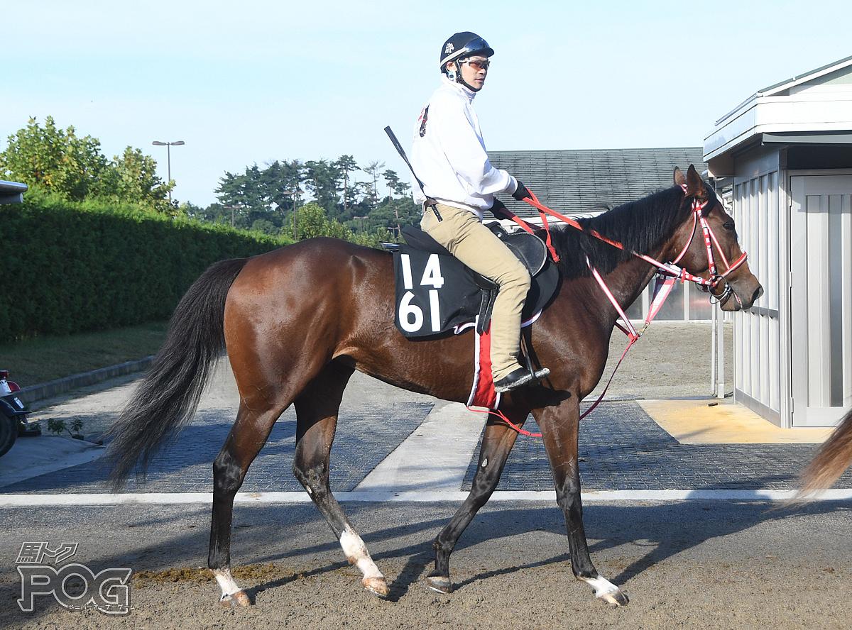ボードウォークの馬体写真