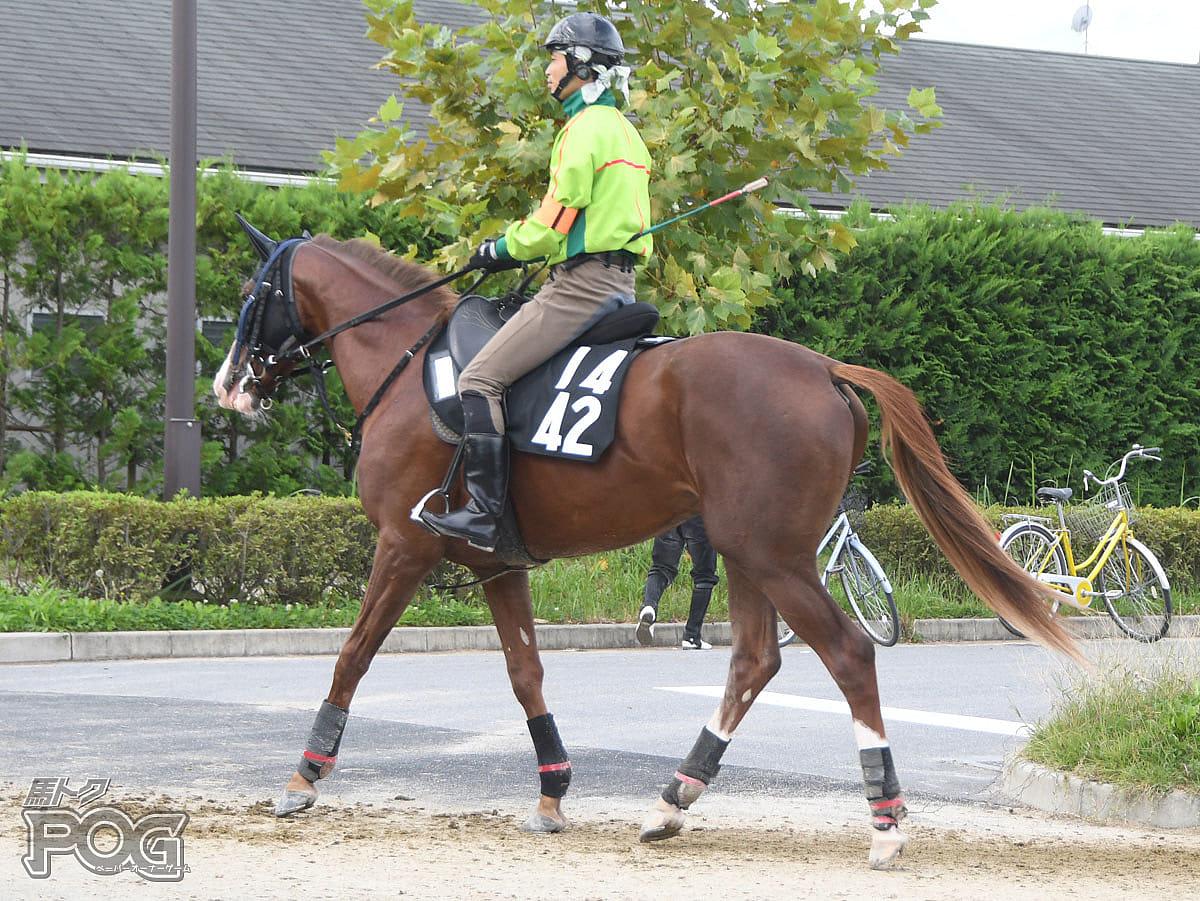 ジャンケルの馬体写真