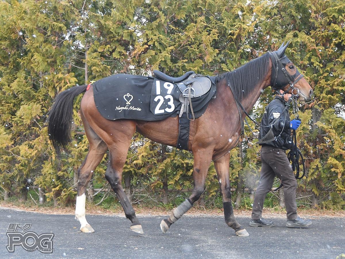 ナムラユッキーの馬体写真