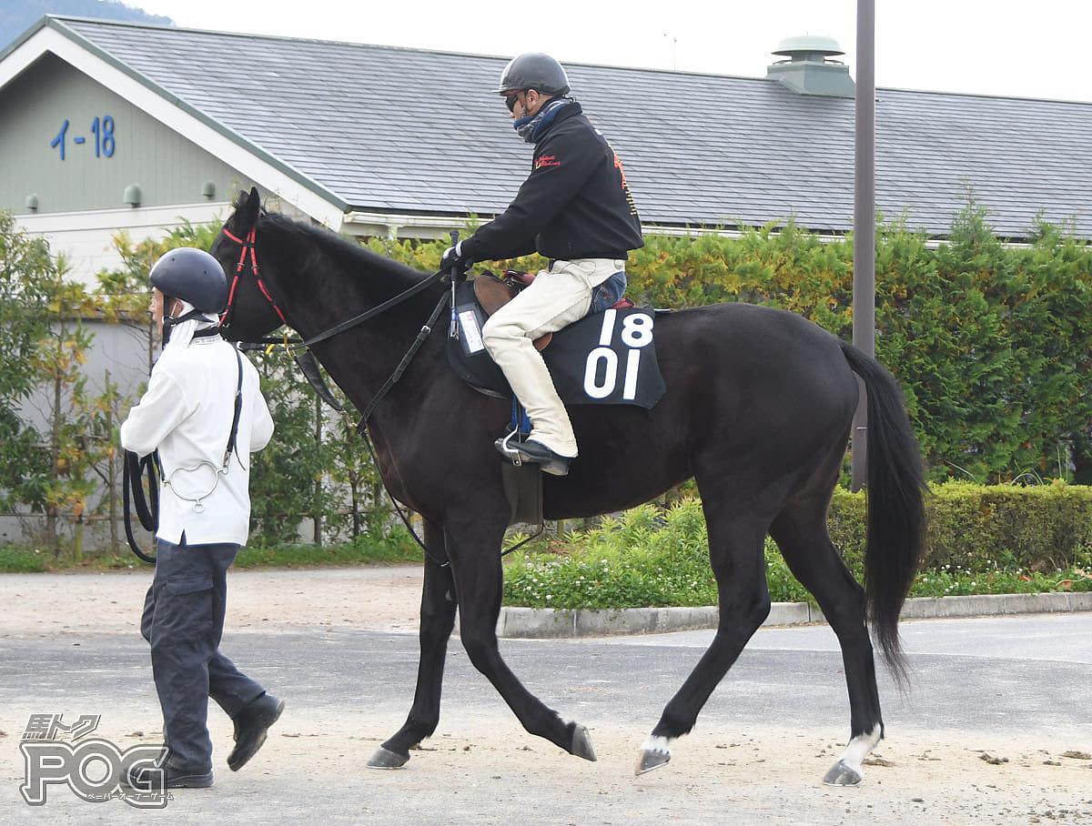 ナムラユメの馬体写真
