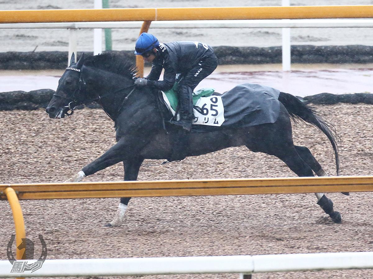 グリムの馬体写真