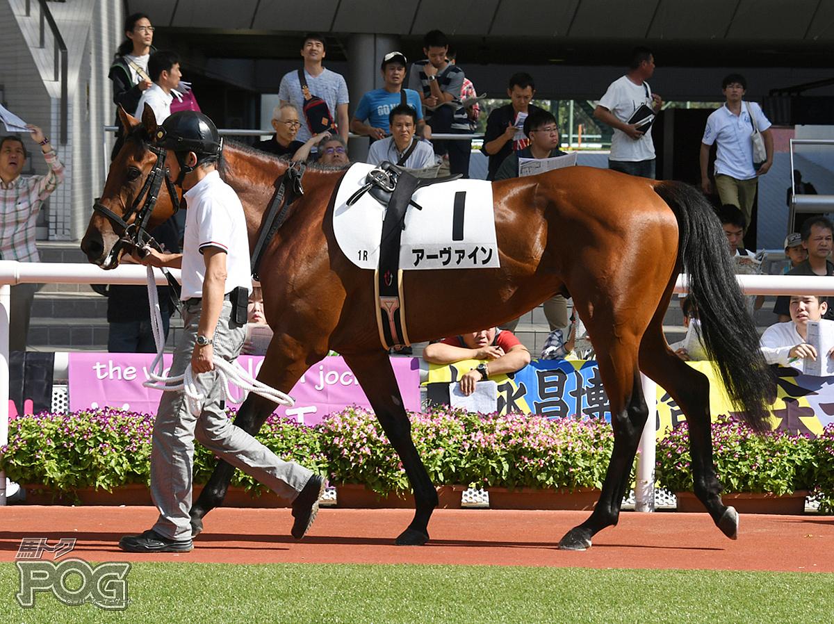 アーヴァインの馬体写真