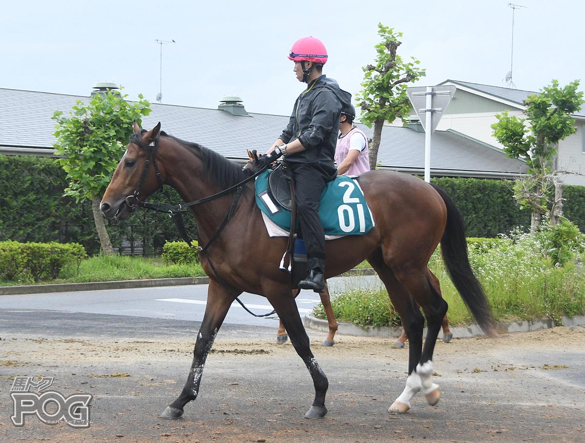 グローバルリーチの馬体写真