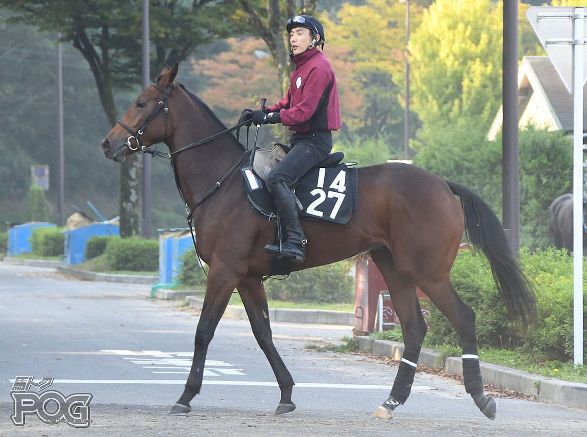 フェアレディの馬体写真