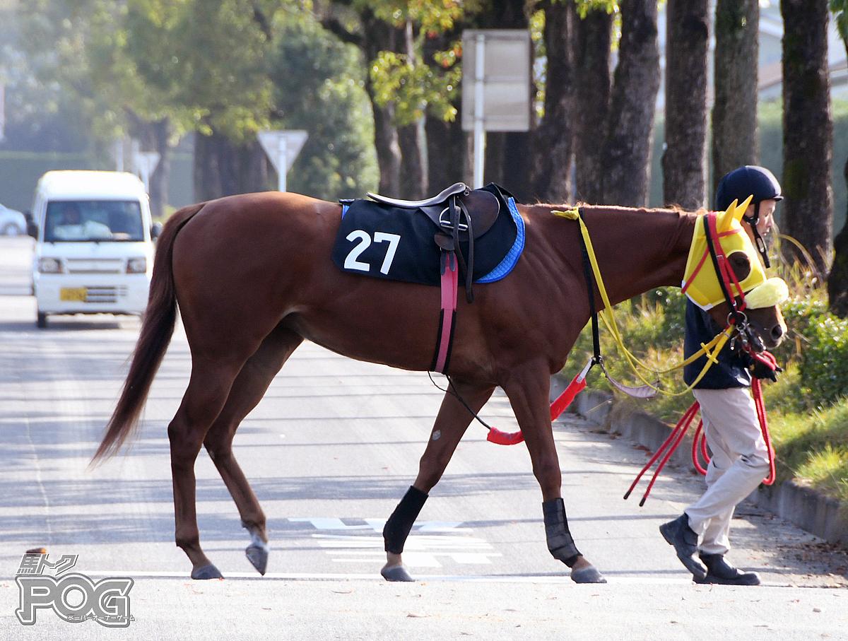 アシャカチムサーの馬体写真