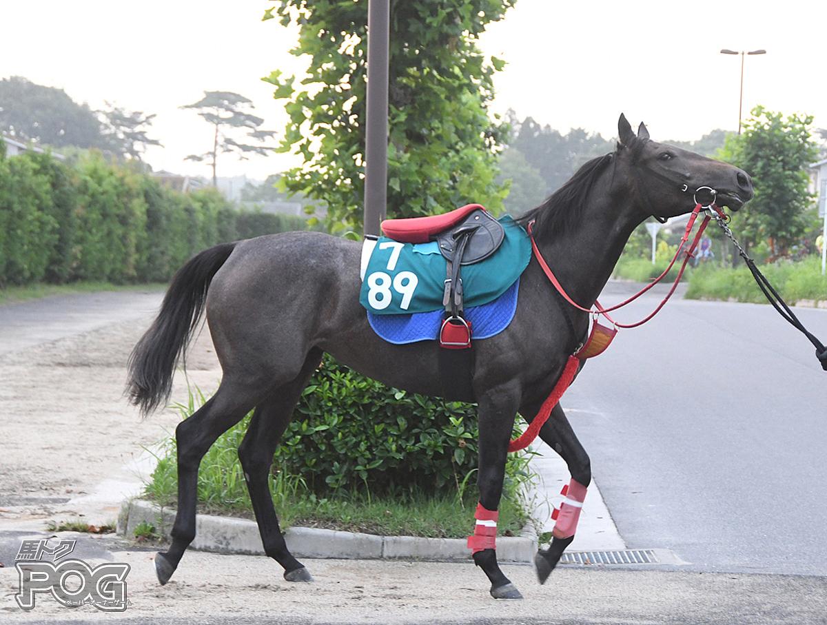 ケイココサージュの馬体写真