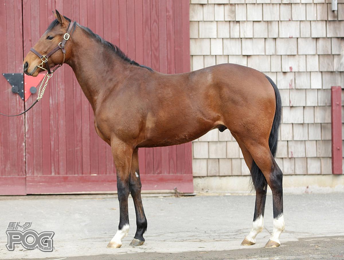 フラントイオの馬体写真