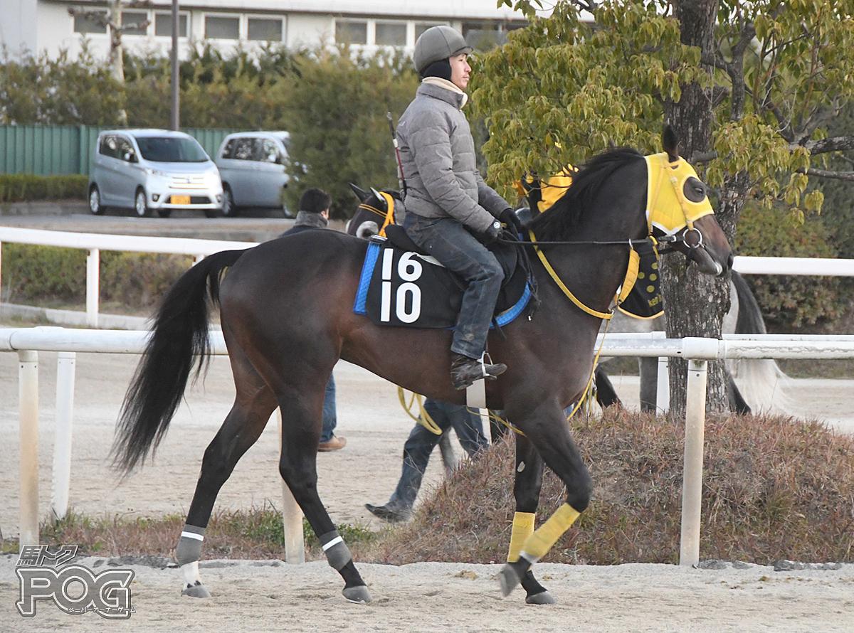 サトノフェイバーの馬体写真
