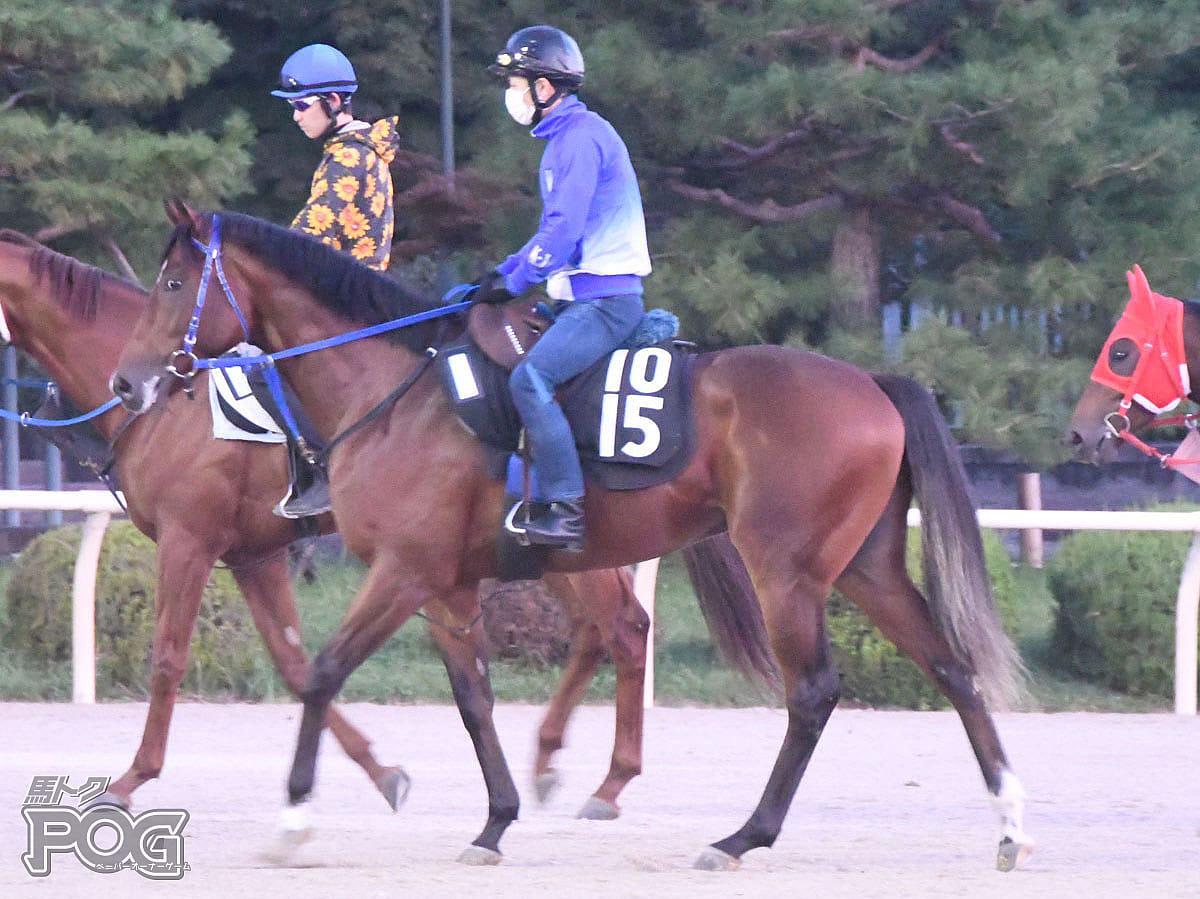 ムーンレイカーの馬体写真