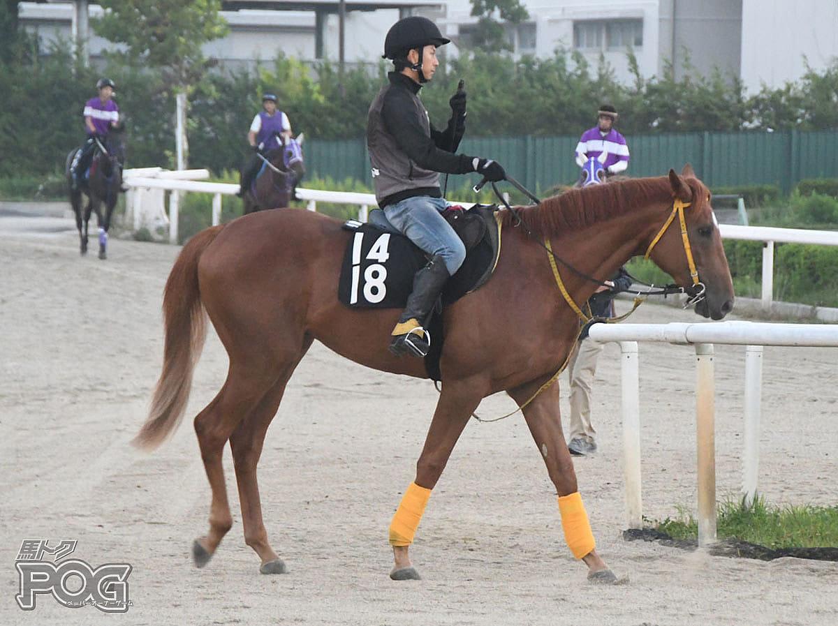 サトノプライドの馬体写真