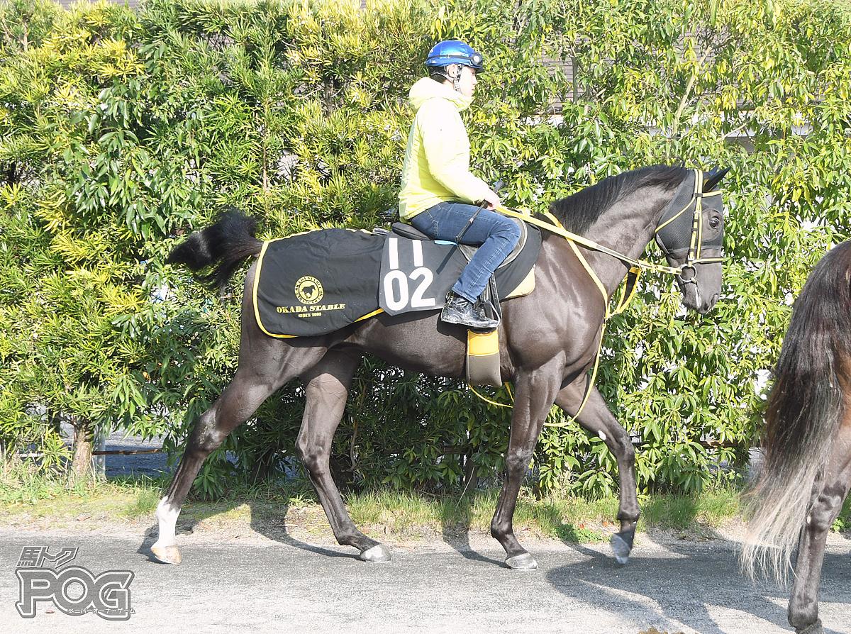 ラヴシーフの馬体写真