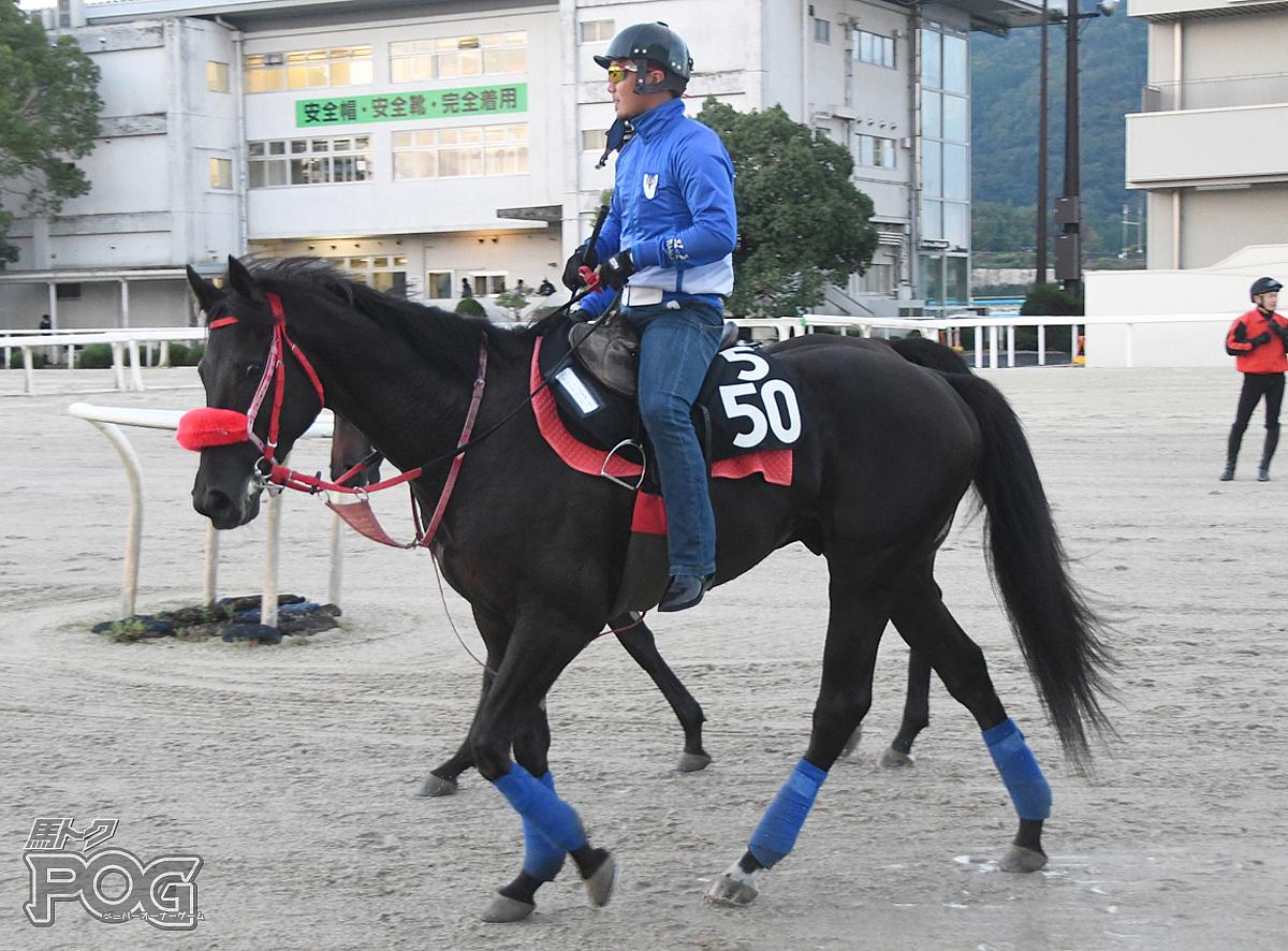 ゼットアレースの馬体写真
