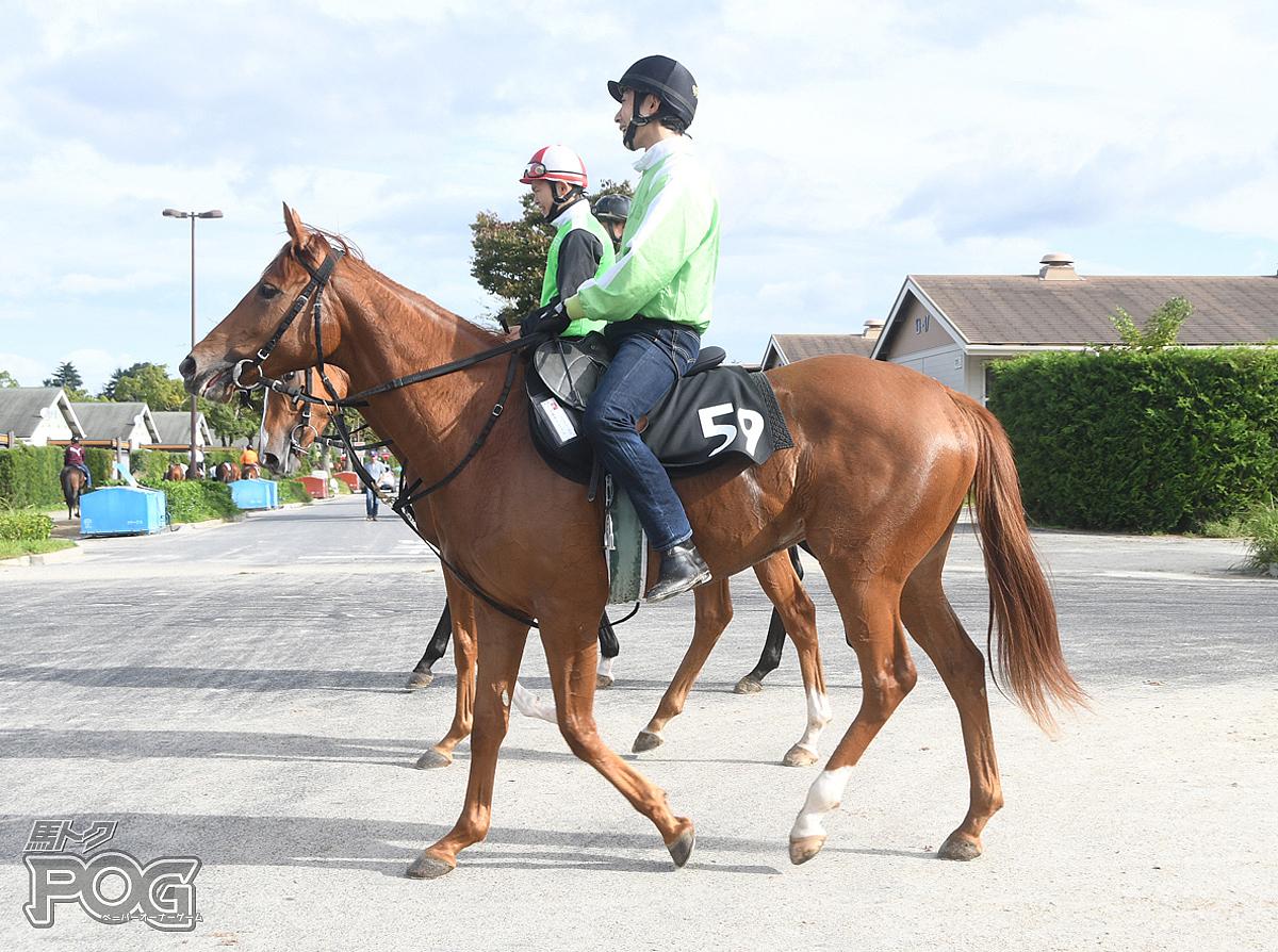 アミスターミノルの馬体写真