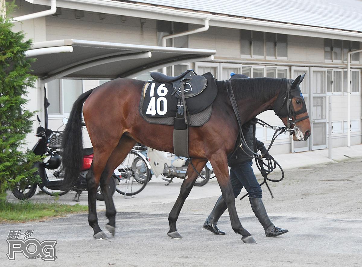 ナポリタンの馬体写真