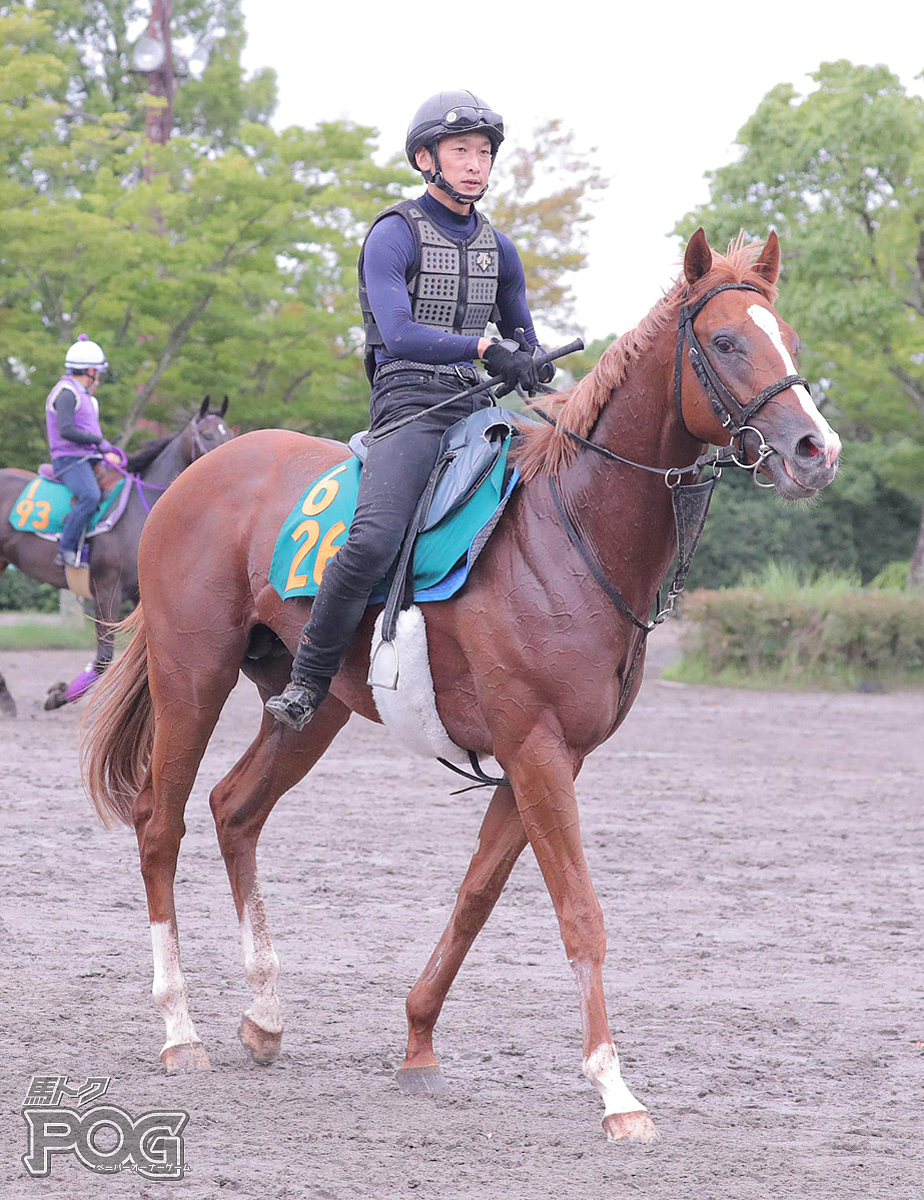 グランデウィークの馬体写真