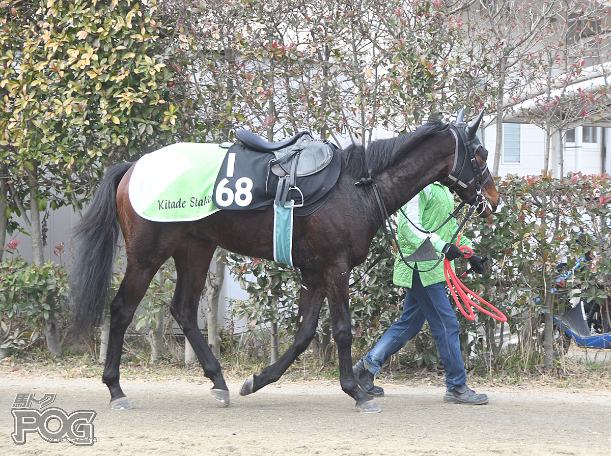 エポドスミノルの馬体写真