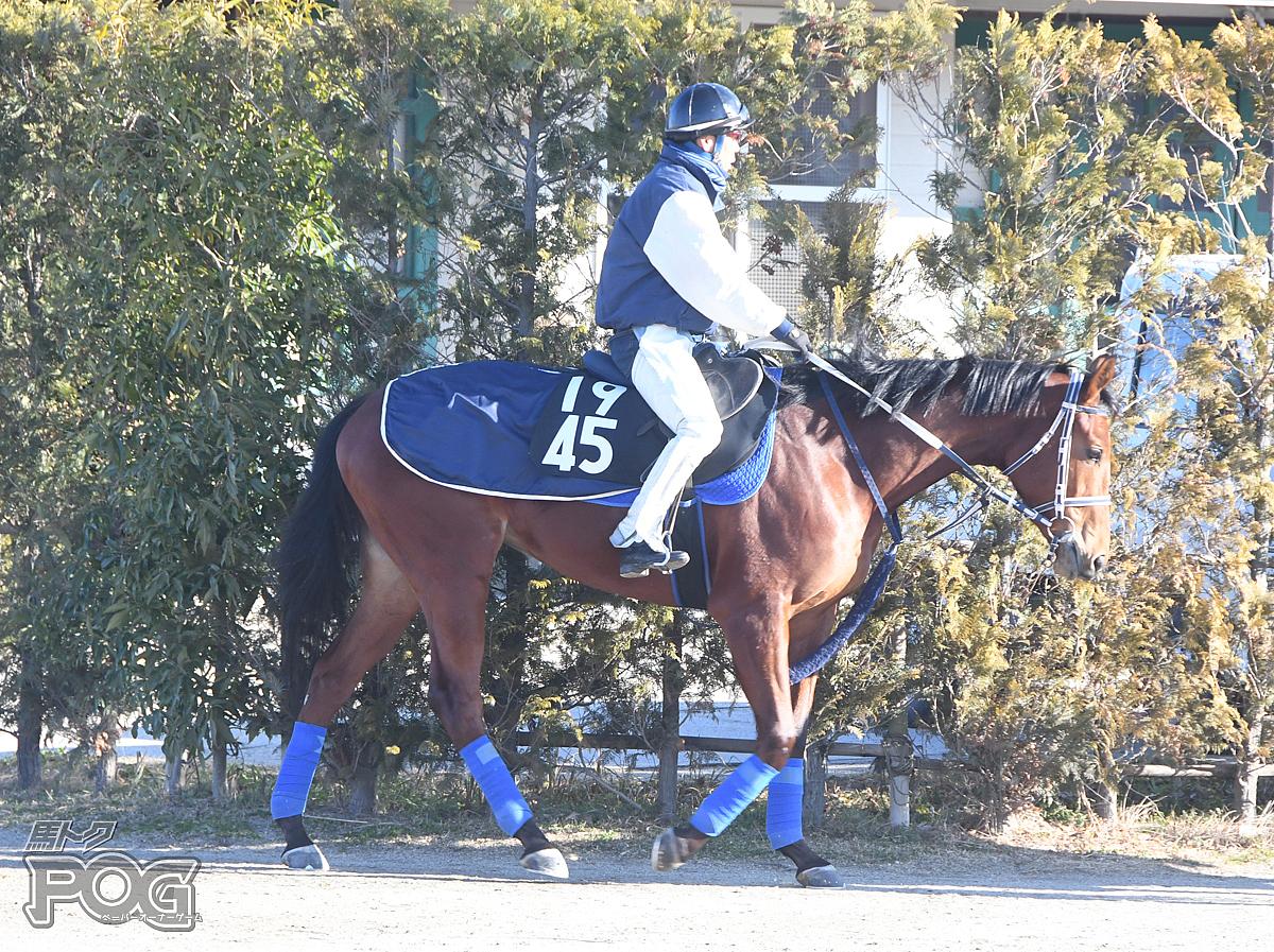 カリブメーカーの馬体写真